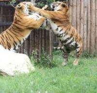 digital_zoo_in_romania_306102c